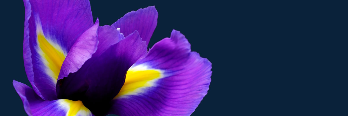 Iris Nami Flower